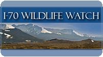 Wildlife Watch detail image