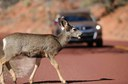 Deer Crossing thumbnail image