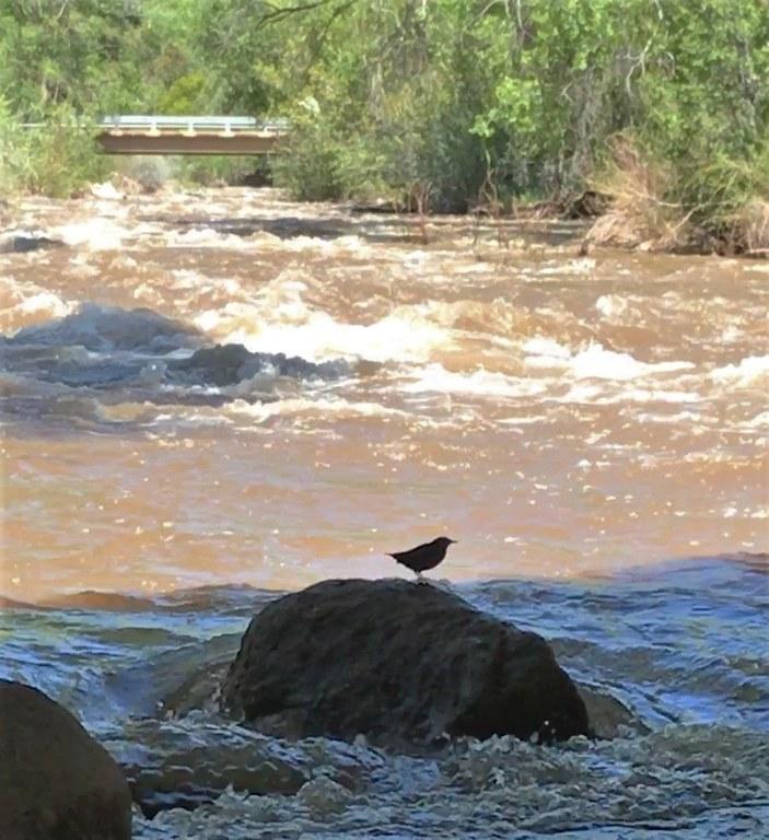 Nesting Birds_Hermosa Creek Bridge_02_05.06.2020.jpg