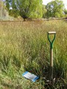 Soil sampling in region 5 thumbnail image