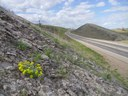 Bell's Twinpod US 36 thumbnail image