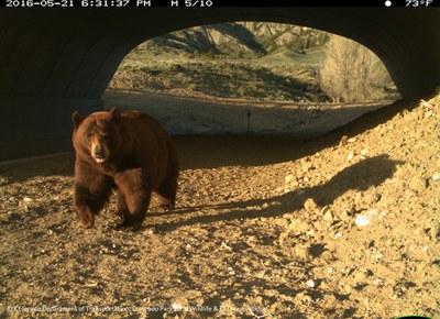 SH 9 Black Bear Underpass 2016