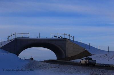 SH 9 Deer Crossing Overpass Jan 2016