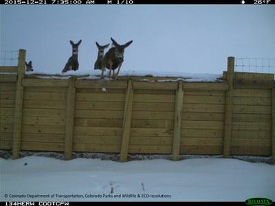 SH 9 Deer Escape Ramp CDOT CPW 122115