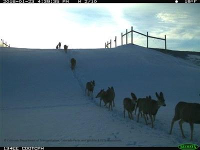 SH 9 Deer Herd Overpass 012316