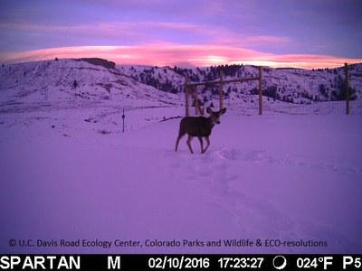 SH 9 Deer Sunset Overpass 021016