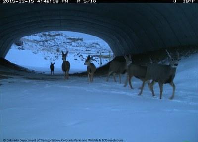 SH 9 Deer Underpass CDOT CPW 121515