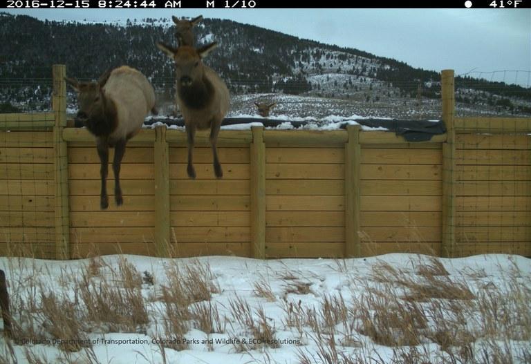 SH 9 Elk Escape Ramp 2016