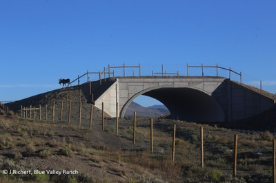 SH 9 Moose Crossing Overpass 090916
