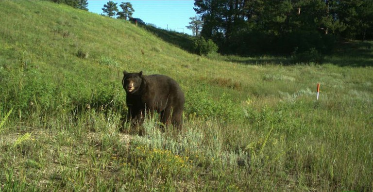 Bear on grass along corridor