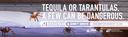 CDOT DUI BusTails Turantulas thumbnail image
