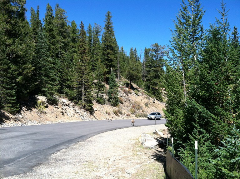 Watch for Wildlife on Guanella Pass Nov 2013