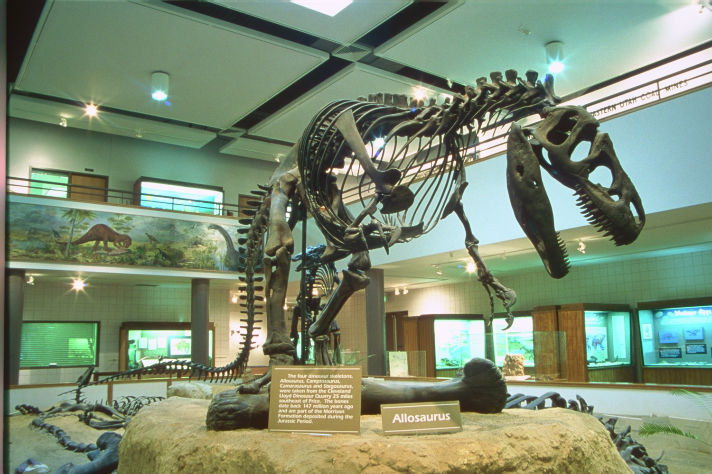 Museum Display detail image