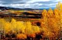 Grand Mesa- Fall